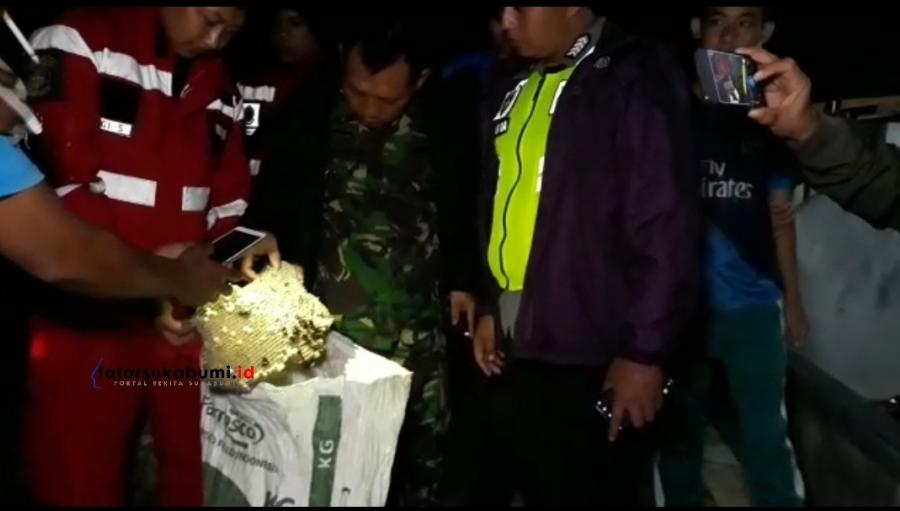 38 Kasus Ancaman Tawon Vespa Sepanjang Tahun 2019 di Sukabumi