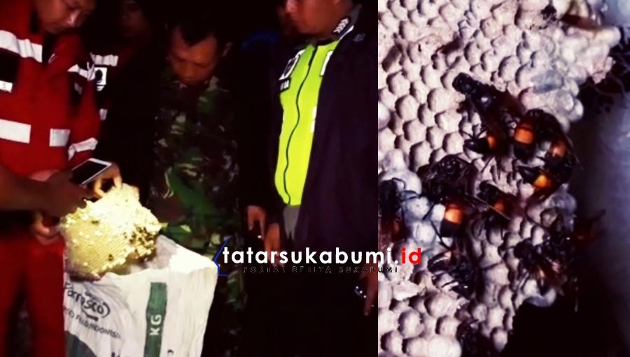 Tewaskan Puluhan Warga Jawa Tengah, Teror Tawon Vespa Hantui Warga Cicurug Sukabumi