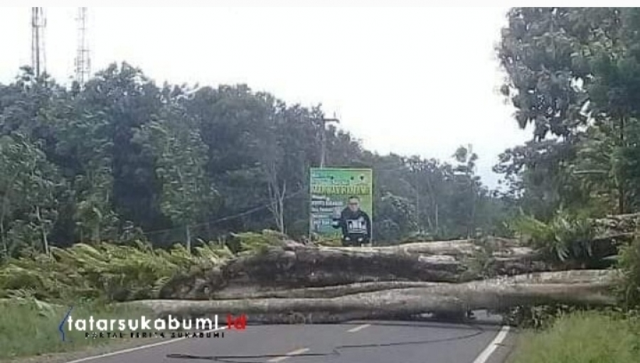Hujan Angin! Pohon Raksasa Tumbang Tutup Jalan Sukabumi - Palabuhanratu