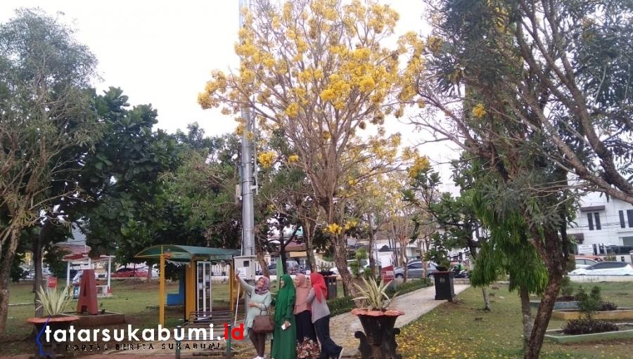 Instagramable! Bunga Sakura Bersemi di Alun-alun Kota Sukabumi