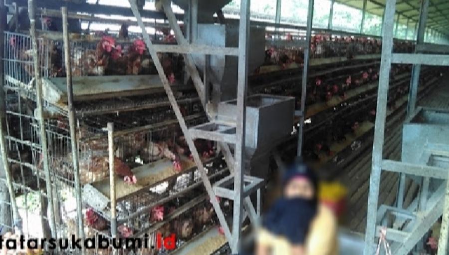 30 Persen Peternakan di Sukabumi Belum Berizin, DLH Tidak Keluarkan Izin Pendirian Peternakan di Zona Terlarang