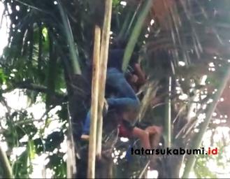 Percobaan Bunuh Diri, Pria Paruh Baya Nekad Lompat Dari Atas Pohon Aren di Parungkuda Sukabumi