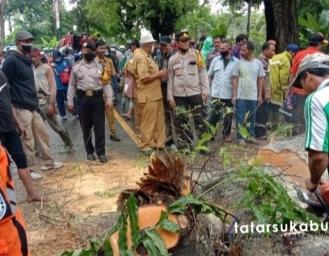 Pohon Tumbang Tutup Akses Jalan Sukabumi Palabuharatu