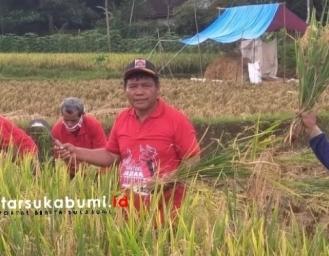 Panen Raya Padi Jampang Kulon, Petani Pahlawan Tekan Harga Beras Ditengah Pandemi