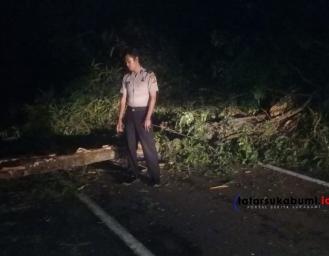 Pohon Tumbang Melintang di Jalan Palabuhanratu - Kiaradua