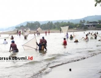 Fakta Unik Panen Teri Impun di Palabuhanratu Sukabumi