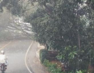Pohon Tumbang Tutup Akses Jalan Palabuhanratu Sukabumi