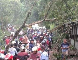 Pohon Tumbang Timpa Rumah Warga di Cibadak Sukabumi